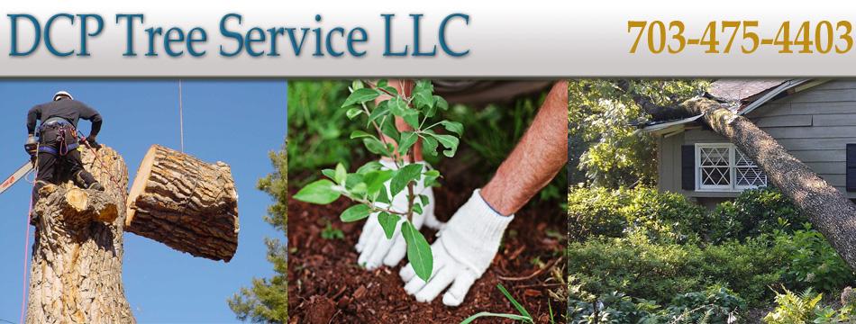 DCP-Tree-Service-LLC.jpg
