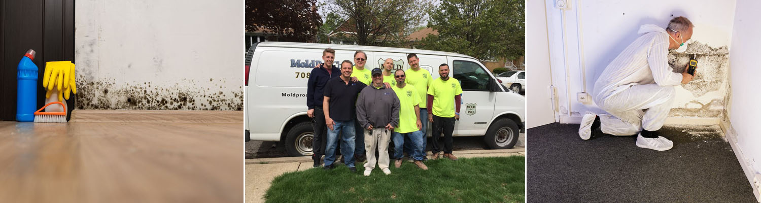 Mold Removal Expert Schererville IN